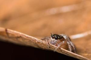 Spinne auf einem Blatt