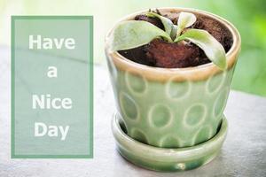 Ich wünsche Ihnen einen schönen Tag als inspirierendes Zitat
