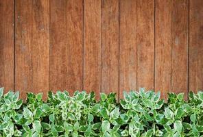 grüne Pflanzen mit einer alten Holzwand foto