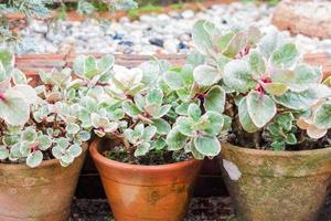 Grünpflanzen in Töpfen foto