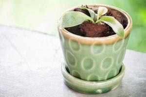 grüne Pflanze in einem Keramikblumentopf foto