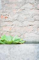Topfpflanze in einem grauen Behälter
