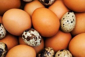 verschiedene Arten von Eiern