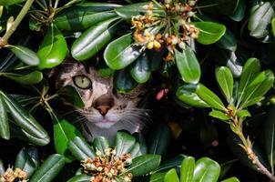 Katze versteckt sich im Busch