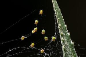Nimm eine Nahaufnahme Spinne