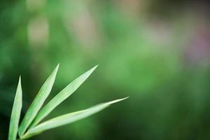 grüner Bambushintergrund foto