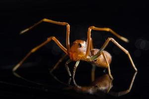 Spinne auf Glasoberfläche