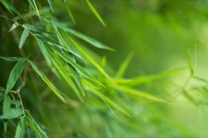 grüner Bambushintergrund