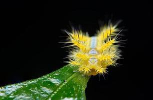 Wurm auf einer Pflanze