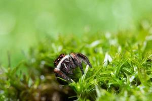 Spinne im Gras