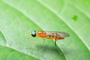 Insekt auf einer Pflanze