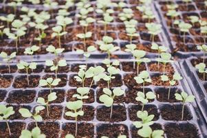 Nahaufnahme von Pflanzenstartern foto