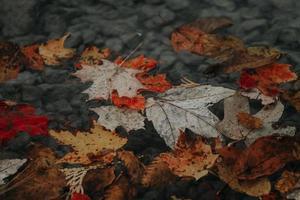 Nahaufnahme von Herbstlaub auf dem Boden foto