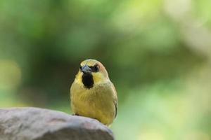 Vogel auf einem Felsen foto
