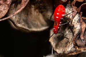 Insekt auf einem Blatt, Nahaufnahme
