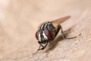fliege auf einem trockenen Blatt