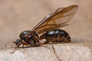 Insekt auf trockenem Blatt