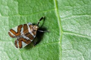 Schmetterling auf einem Blatt