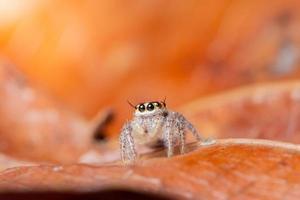 Spinne auf einem trockenen Blatt
