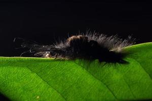 Wurm auf einem Blatt, Nahaufnahmefoto