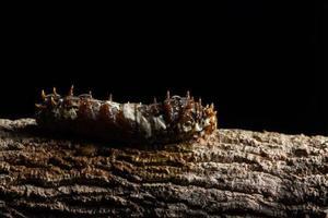 Wurm auf einem Ast