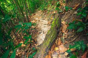 üppige Waldvegetation