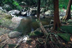 Wald im Khao Chamao Wasserfall Nationalpark