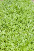Haufen grüner Pflanzen