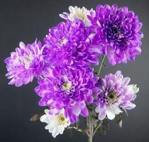 lila und weiße Blumen auf einem grauen Hintergrund foto