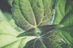 grüner Blatthintergrund, Nahaufnahme foto
