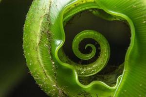 grüne Pflanze auf schwarzem Hintergrund foto