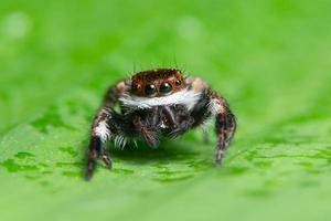 Spinne auf grünem Hintergrund