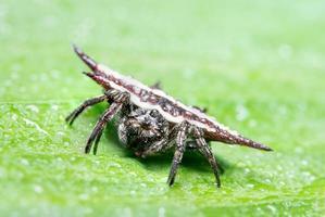 Spinne auf nasser Oberfläche
