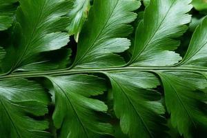 grüner Blatthintergrund, Nahaufnahme
