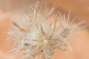 Wildblume, Nahaufnahmefoto