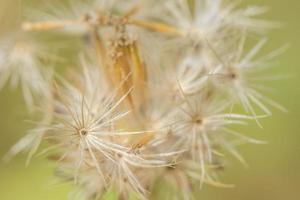 Hintergrund Makro Wildblume