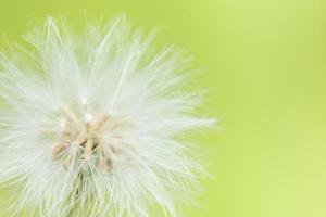 Wildblume auf grünem Hintergrund