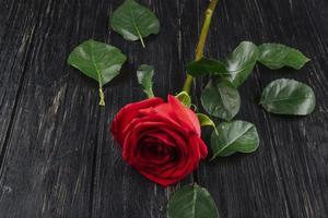 rote Rose mit grünen Blättern auf einem dunklen hölzernen Hintergrund