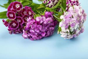 lila Blumen auf einem blauen Hintergrund