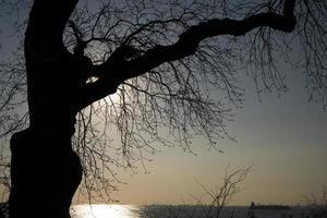 Silhouette eines Baumes zur Sonnenuntergangszeit foto