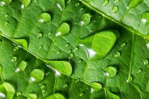 Wassertropfen auf ein grünes Blatt