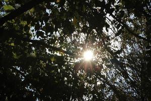 Sonnenlicht kommt durch die Bäume