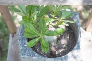 Nahaufnahme einer Pflanze in einem Behälter
