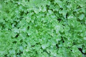 Bündel grüner Blätter