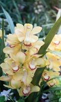 gelbe Blumen mit grünem Hintergrund