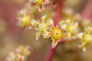 weiße und gelbe Blume, Nahaufnahmefoto