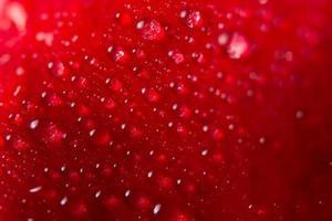 Wassertropfen auf Blütenblättern