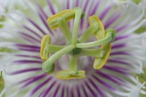 Blume Nahaufnahme Hintergrund