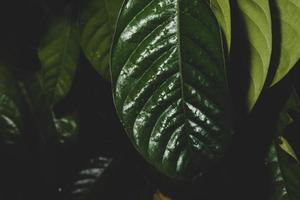 dunkler Blätterhintergrund