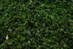 zahlreiche Glühbirnen schmücken Kiefern foto